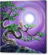Barn Owl In Twisted Pine Tree Canvas Print