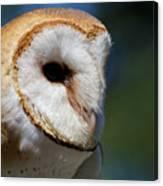 Barn Owl - Intensity Canvas Print
