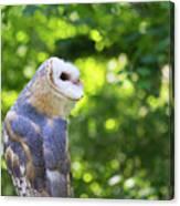 Barn Owl Looking Skyward Canvas Print