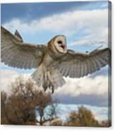 Barn Owl Makes A Happy Landing Canvas Print