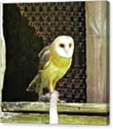 Barn Owl On The Prowl Canvas Print