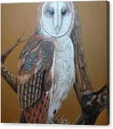 Barn Owl On Tree Canvas Print