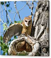 Barn Owl Owlet Stretches Canvas Print