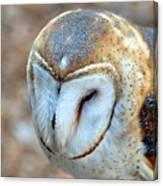 Barn Owle 1 Canvas Print