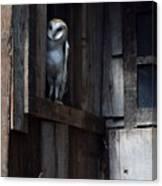 Barn Owl......i See You. Canvas Print