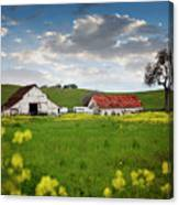 Barn Paso Robles, Ca Canvas Print