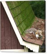 Barn Squirrel Canvas Print