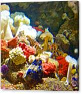 Barnacles And Sea Urchin Among Invertebrates In Monterey Aquarium-california  Canvas Print