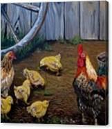 Barnyard Chickens Canvas Print