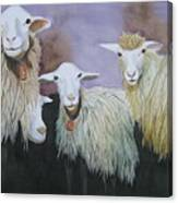 Barnyard Series Canvas Print