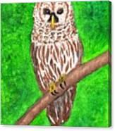 Barred Owl 08-18-2015 Canvas Print