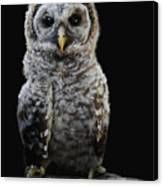 Barred Owl Baby -4 Canvas Print