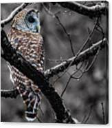 Barred Owl Hungry  Canvas Print