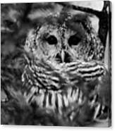 Barred Owl In Black And White Canvas Print