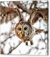 Barred Owl In Flight 4830 Canvas Print