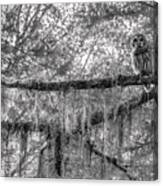 Barred Owl In Monochrome Canvas Print