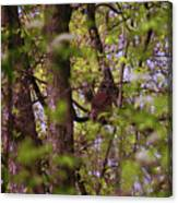 Barred Owl In The Forest Canvas Print