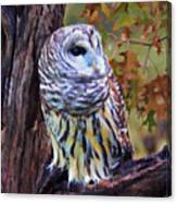 Barred Owl In The Rain Oil Painting Canvas Print