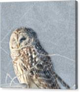 Barred Owl In The Snowstorm Canvas Print
