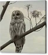 Barred Owl On A Tree Canvas Print