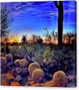 Barrel Cacti Ambling Along Canvas Print