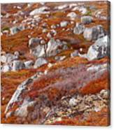 Barrens Canvas Print