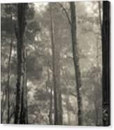 Barrington Mist Canvas Print