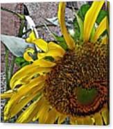 Barrio Sunflower 3 Canvas Print