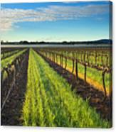 Barrossa Vineyard Sunrise Canvas Print