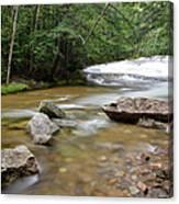 Bartlett Experimental Forest - Bartlett New Hampshire Usa Canvas Print