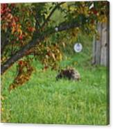 Barton Backyard Canvas Print
