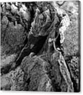 Basalt Textures Canvas Print