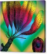 Basia Plant Canvas Print