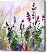Basil Culinary Herb Watercolor Canvas Print