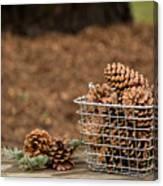 Basket Of Cones Canvas Print