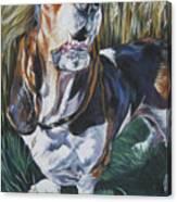 Basset Hound In Wheat Canvas Print