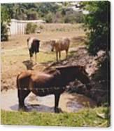 Bathing Horse Canvas Print