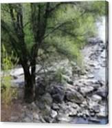 Baum An Der Mur Canvas Print