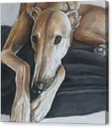 Bauregard Canvas Print