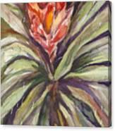 Bayonet Cactus Canvas Print