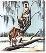 Bayou Bobcats Canvas Print