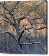 Bb's Tree 2 Canvas Print