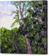 Bc 16 Canvas Print