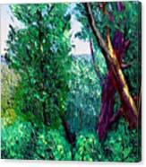 Bcsp 6 22 Canvas Print