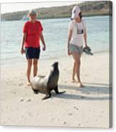 Beach  At Santa Fe Island In Galapagos Canvas Print