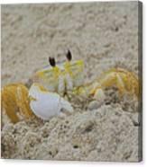 Beach Crab In Sand Canvas Print