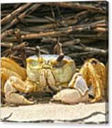 Beach Crab Canvas Print