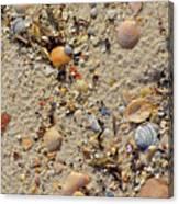 Beach Deposit Canvas Print