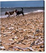 Beach Dogs Canvas Print