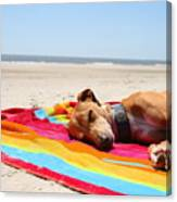 Beach Dreams Are Made Of These Canvas Print